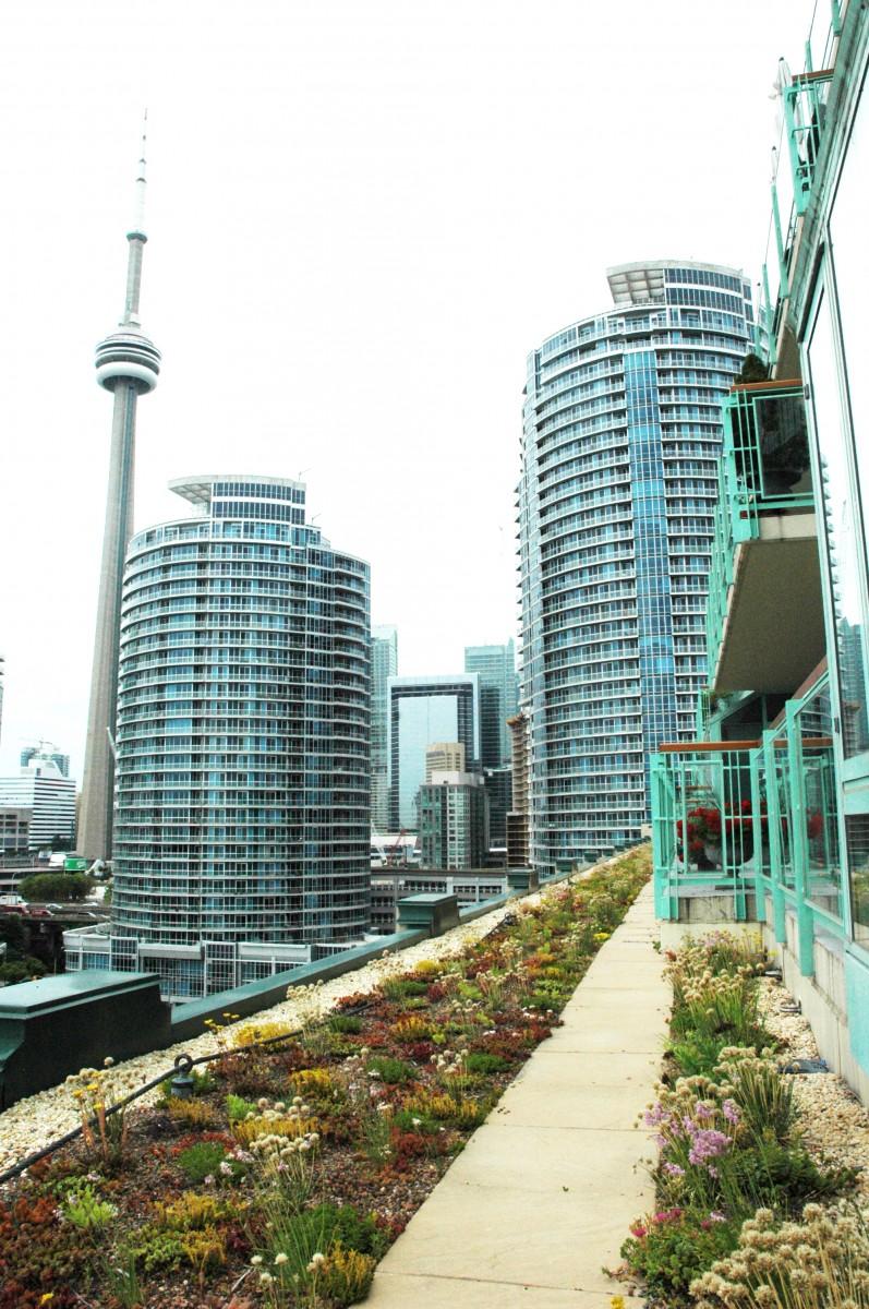 Green Roof Design Install Amp Maintenance 183 Environmental